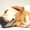 Accanimento Terapeutico nel Gatto e Cane