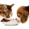 Carne di maiale nel cane e nel gatto