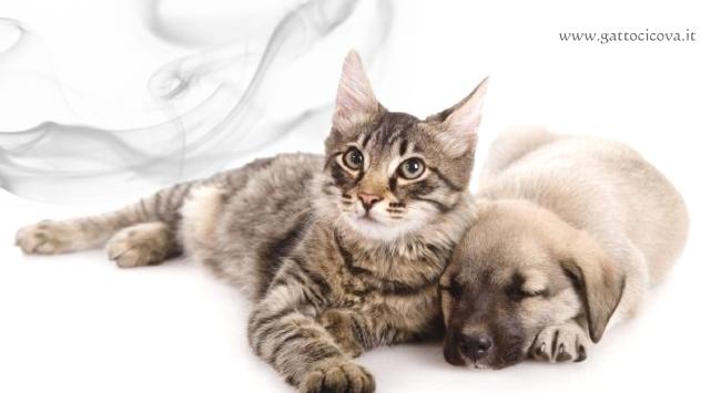Fumo passivo nel Cane e nel Gatto