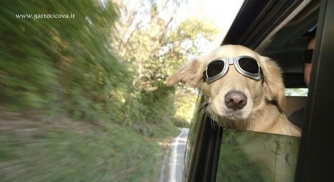 Viaggiare col Cane Spostamenti Comodi