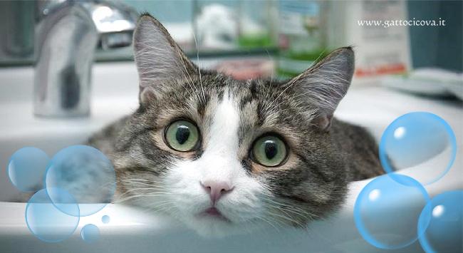 Bagno al Gatto