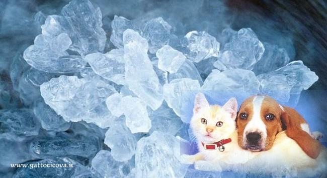 Silicio Organico nel Gatto nel Cane