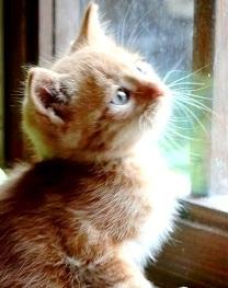 comunicazione-gatto-sordo