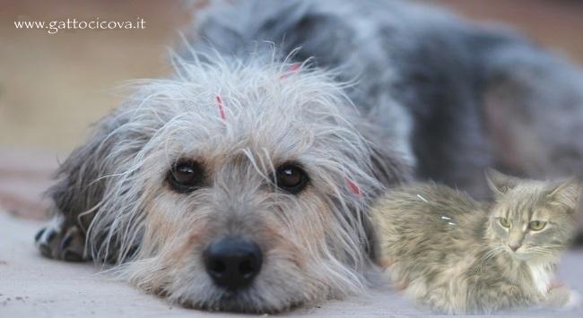 Agopuntura nel Gatto e Cane