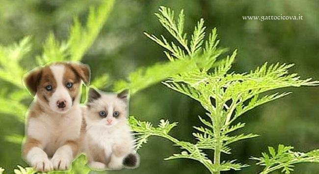 Artemisia Annua nel Cane e Gatto