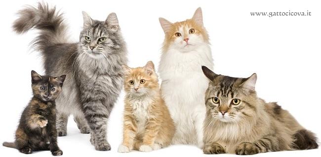 Patologie dei Gatti di Razza