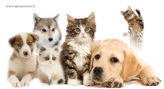 Sterilizzazione nel Gatto e Cane