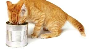 avvelenamento-da-piombo-nel-gatto