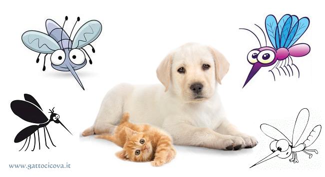 Filariosi del Cane e Gatto