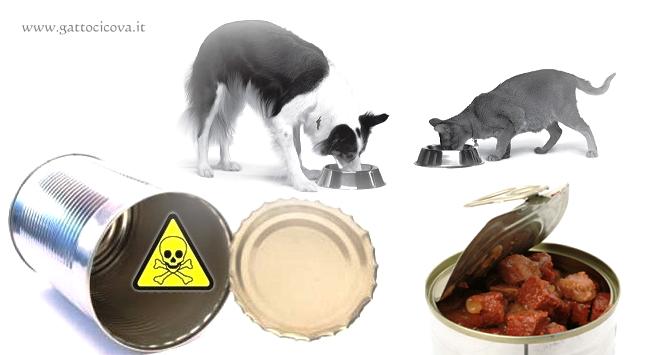 Intossicazione da PIOMBO nel Gatto e nel Cane