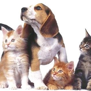 Antibiotici nel Cane e nel Gatto