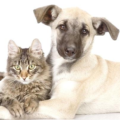 Vaccinazioni Mirate nel Cane e Gatto