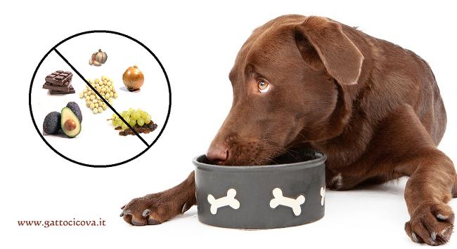 Alimenti Tossici per Cani