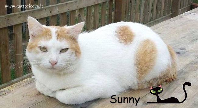Gatto con Linfoma Multicentrico