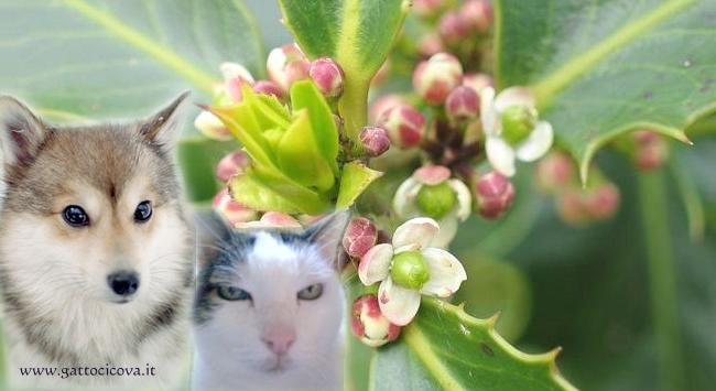Holly nel Cane e Gatto