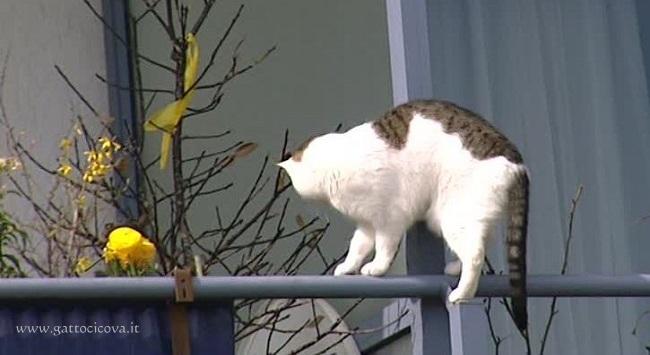 ai Gatti piace camminare sulle ringhiere