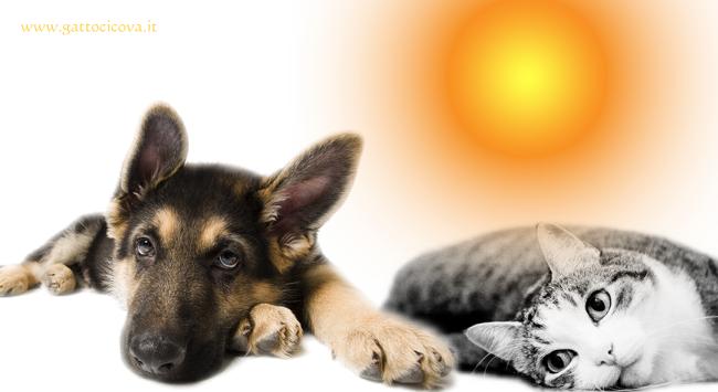 Cani e Gatti Anziani