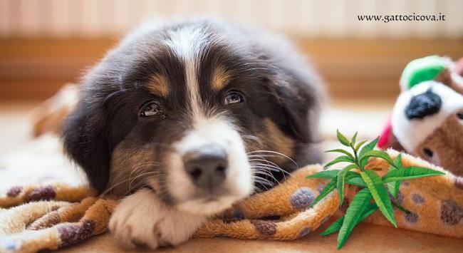 Tranquillizzare il Cane Rimedi Naturali