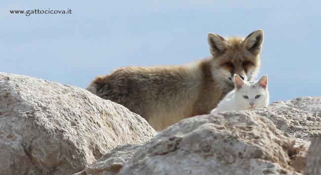 una Volpe e un Gatto