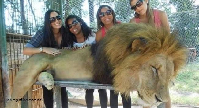 Selfie con Animali sedati in Argentina