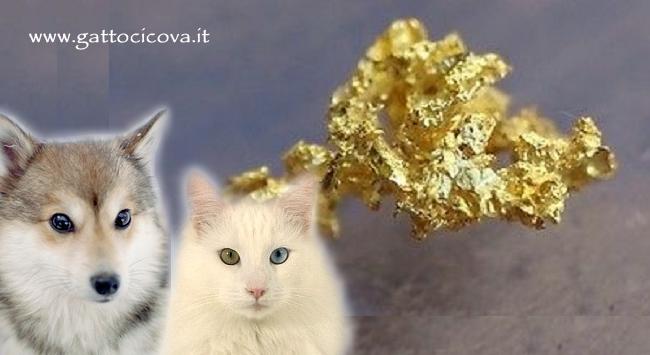Aurum Metallicum nel Cane e Gatto Antidepressivo e Rivitalizzante