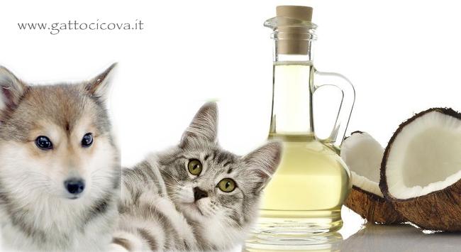 Olio di Cocco nel Cane e Gatto