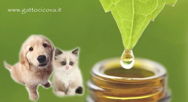 Organoterapia nel Gatto e Cane