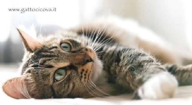 Segnali di Malessere nel Gatto