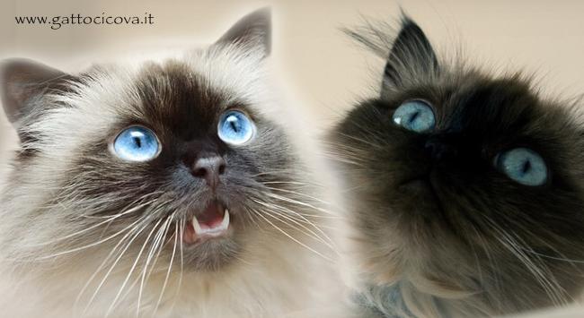 Caduta dei Denti nel Gatto