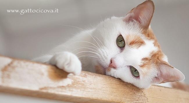 Aiutare un Gatto ad Elaborare il Lutto