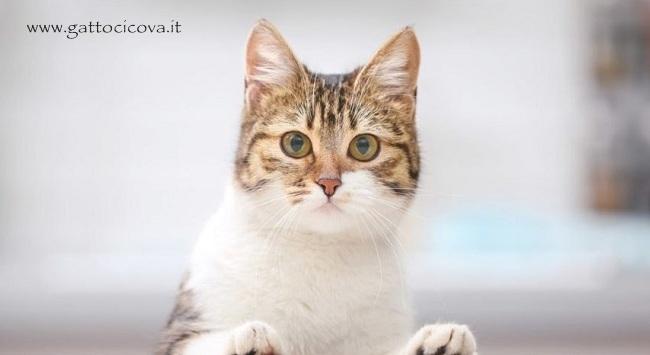 Parvovirus Felino