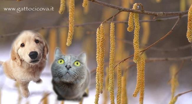 Corylus Avellana nel Cane e nel Gatto